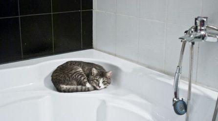 Kiedy należy kąpać kota?