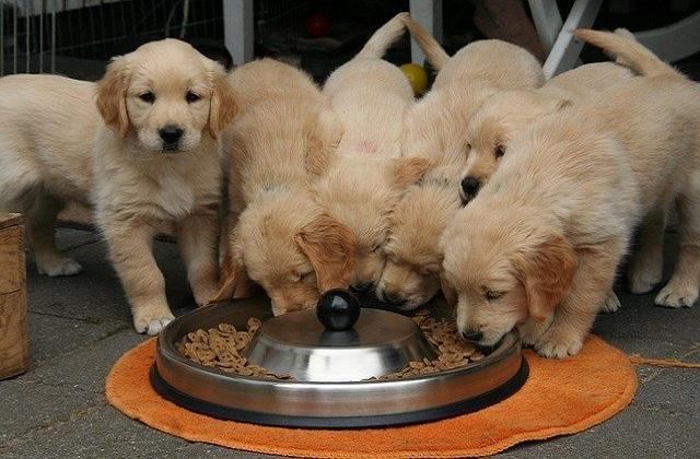 Czym karmić psa?