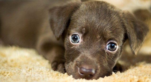 Adopcja czy kupno psa?