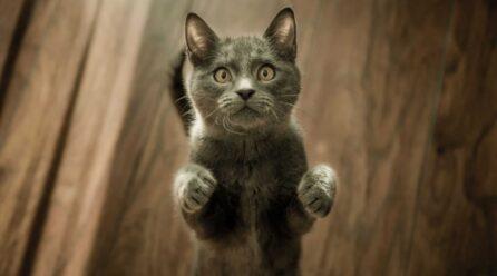 Czy nicienie płucne mogą zagrażać Twojemu kotu?